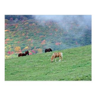 Caballos en la montaña postal