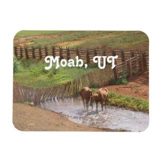 Caballos en Moab Iman Flexible