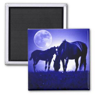 Caballos en noche azul imán cuadrado