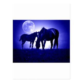 Caballos en noche azul postales