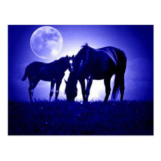 Caballos en noche azul postal
