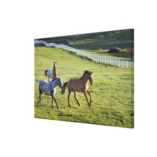 Caballos en pasto cerca de Polson, Montana 2 Impresión En Tela