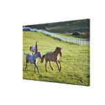 Caballos en pasto cerca de Polson, Montana 2 Lienzo Envuelto Para Galerias
