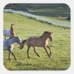 Caballos en pasto cerca de Polson, Montana 2 Pegatina Cuadradas Personalizada