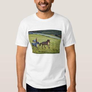 Caballos en pasto cerca de Polson, Montana 2 Polera