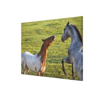 Caballos en pasto cerca de Polson, Montana Lona Envuelta Para Galerias