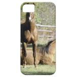 Caballos en pasto iPhone 5 carcasa