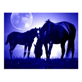 Caballos en postales azules de la noche
