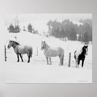 Caballos en rancho impresiones