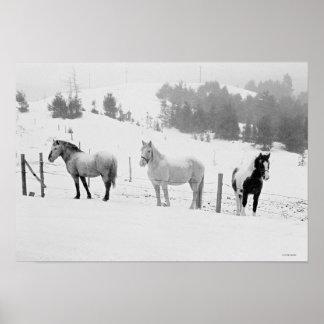 Caballos en rancho poster