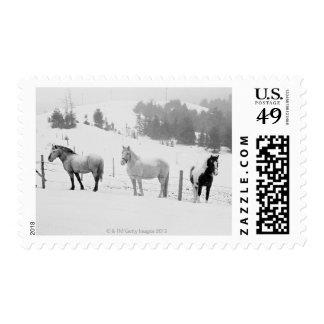 Caballos en rancho timbres postales