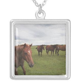 Caballos en un campo collares personalizados