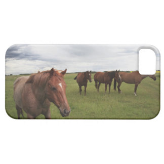 Caballos en un campo iPhone 5 carcasa