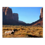 Caballos en valle del monumento tarjetas postales