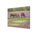 Caballos excelentes en el campo de las flores del impresion en lona