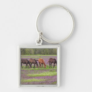 Caballos excelentes en el campo de las flores del  llavero cuadrado plateado