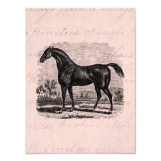Caballos excelentes retros del caballo de raza de cojinete