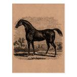 Caballos excelentes retros del caballo de raza de  tarjeta postal