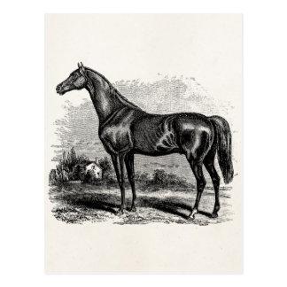 Caballos excelentes retros del caballo de raza de  postal