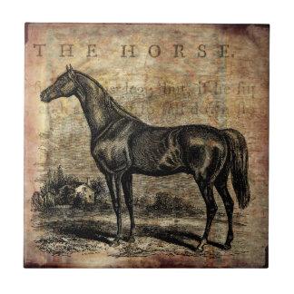 Caballos excelentes y árabes del caballo del teja