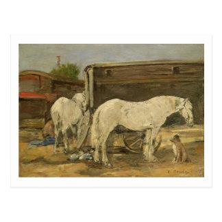 Caballos gitanos, c.1885-90 (aceite en lona) postal