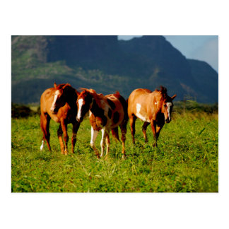 Caballos hawaianos postal
