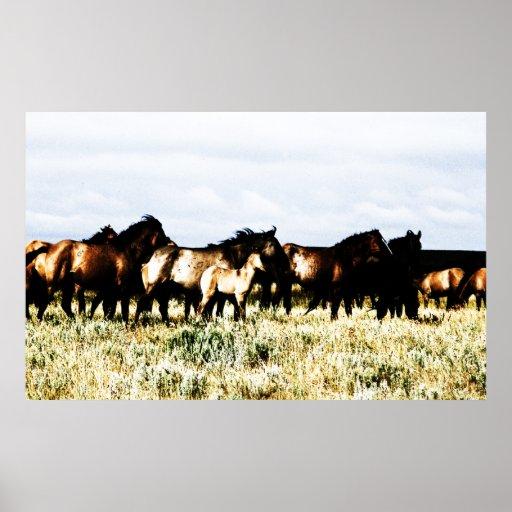 caballos impresiones