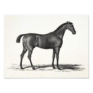 Caballos ingleses de la carrera de caballos de la fotografía