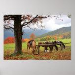 Caballos, montañas, poster del otoño