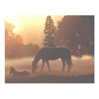 Caballos por la mañana Fog2 Postal