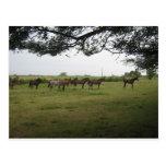 caballos postales