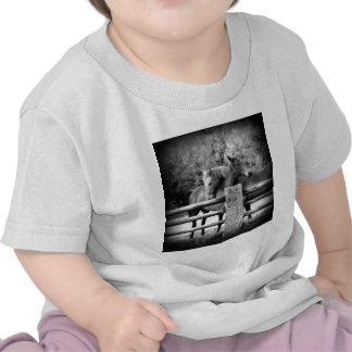 Caballos que abrazan - fotografía del amor del camiseta