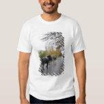 Caballos que caminan abajo de la calle del roble camisas