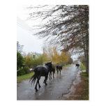 Caballos que caminan abajo de la calle del roble tarjetas postales
