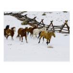 Caballos que corren en nieve tarjetas postales