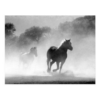 Caballos que funcionan con paisaje hermoso blanco tarjeta postal