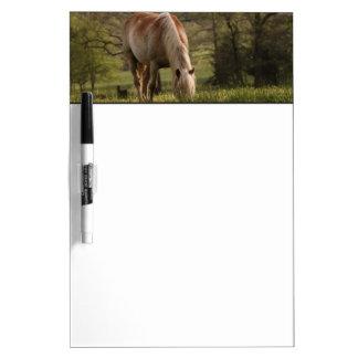 Caballos que pastan en el prado, ensenada de Cades Pizarras Blancas