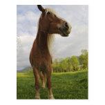 Caballos que pastan en el prado, ensenada de tarjetas postales