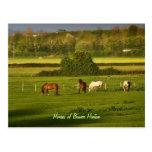 Caballos que pastan en la glorieta Hinton, Postal