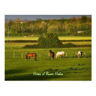 Caballos que pastan en la glorieta Hinton Somerse Postal