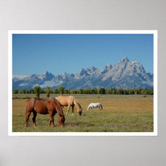 Caballos que pastan en pasto, montañas de Teton Posters