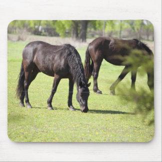caballos que pastan en una granja del caballo alfombrillas de ratones