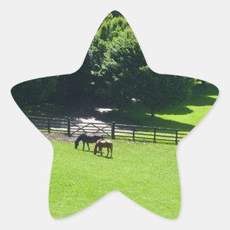 Caballos que pastan en Yorkshire Calcomanía Forma De Estrella