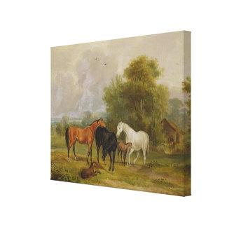 Caballos que pastan: Yeguas y potros en un campo ( Lienzo Envuelto Para Galerias