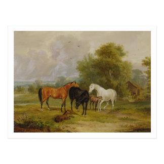 Caballos que pastan: Yeguas y potros en un campo ( Postal