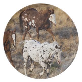 Caballos que vagan por las colinas escénicas del B Platos De Comidas