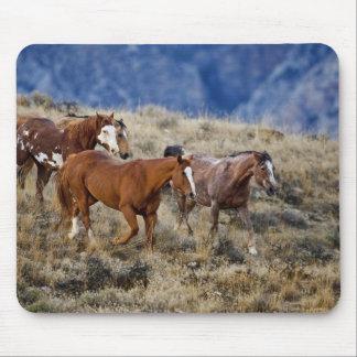 Caballos que vagan por las colinas escénicas del B Tapetes De Ratón