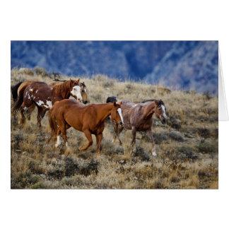 Caballos que vagan por las colinas escénicas del B Tarjeton