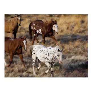Caballos que vagan por las colinas escénicas del B Tarjeta Postal
