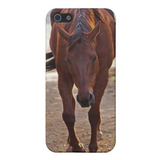 Caballos que vuelven a casa iPhone 5 coberturas